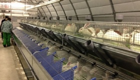 Консультационные услуги по промышленному содержанию и выращиванию кроликов