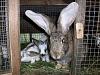 Дезинфекция клеток для кроликов: как и чем обрабатывать?