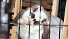 Почему кролик грызет клетку, и что делать?